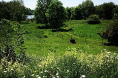 Maasbempter Greend natuurgebied.